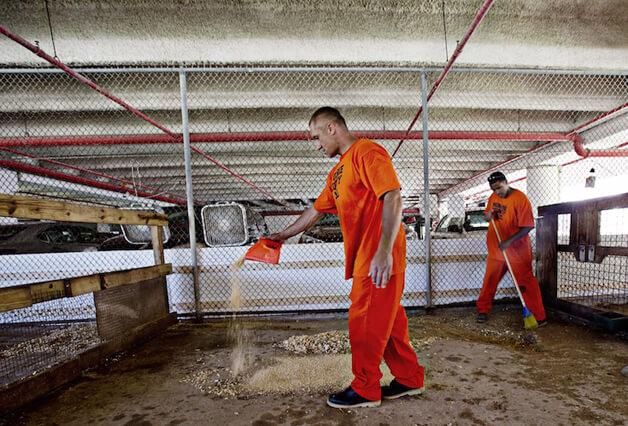 FAZENDA9 - Detentos cuidam de animais abandonados e ambos ganham uma nova chance