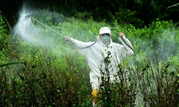 Floripa Agrotóxicos 3 - Está na lei! Florianópolis é a primeira cidade brasileira a banir agrotóxicos das lavouras