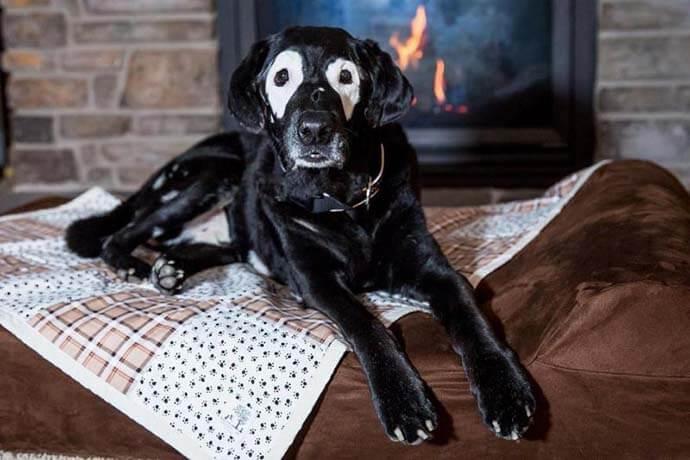 carter2 - Conheça Carter, o menino com vitiligo que começou a se aceitar ao conhecer um cão como ele
