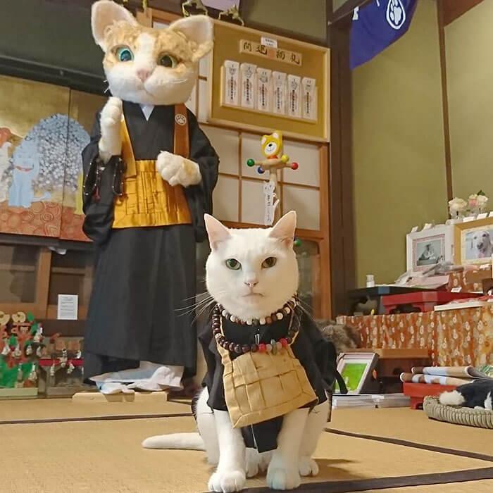 cat temple cafe nekojizo japan 3 5da7103ad5d85 700 - No Japão há um santuário de gatinhos onde os monges são bichanos