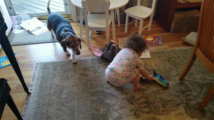 vídeo cachorro pianista e bebê 2 - Pai grava vídeo sem querer da filha dançando enquanto seu cãozinho toca piano