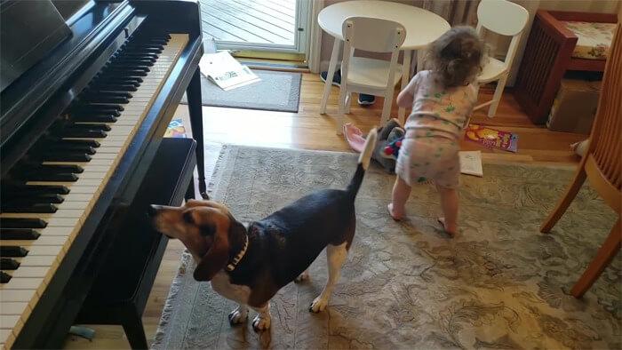 vídeo cachorro pianista e bebê 3 - Pai grava vídeo sem querer da filha dançando enquanto seu cãozinho toca piano