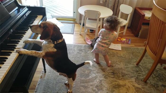 vídeo cachorro pianista e bebê 4 - Pai grava vídeo sem querer da filha dançando enquanto seu cãozinho toca piano