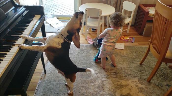 vídeo cachorro pianista e bebê 5 - Pai grava vídeo sem querer da filha dançando enquanto seu cãozinho toca piano