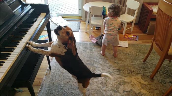 vídeo cachorro pianista e bebê 6 - Pai grava vídeo sem querer da filha dançando enquanto seu cãozinho toca piano