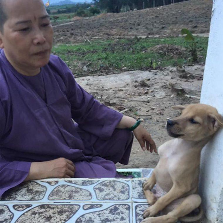 abraço cachorros 1 760x760 - Cachorrinhos ficam abraçados todo o tempo após serem resgatados