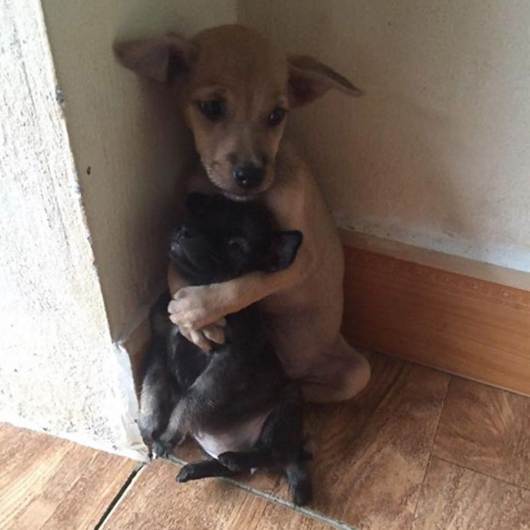 abraço cachorros 2 760x760 - Cachorrinhos ficam abraçados todo o tempo após serem resgatados