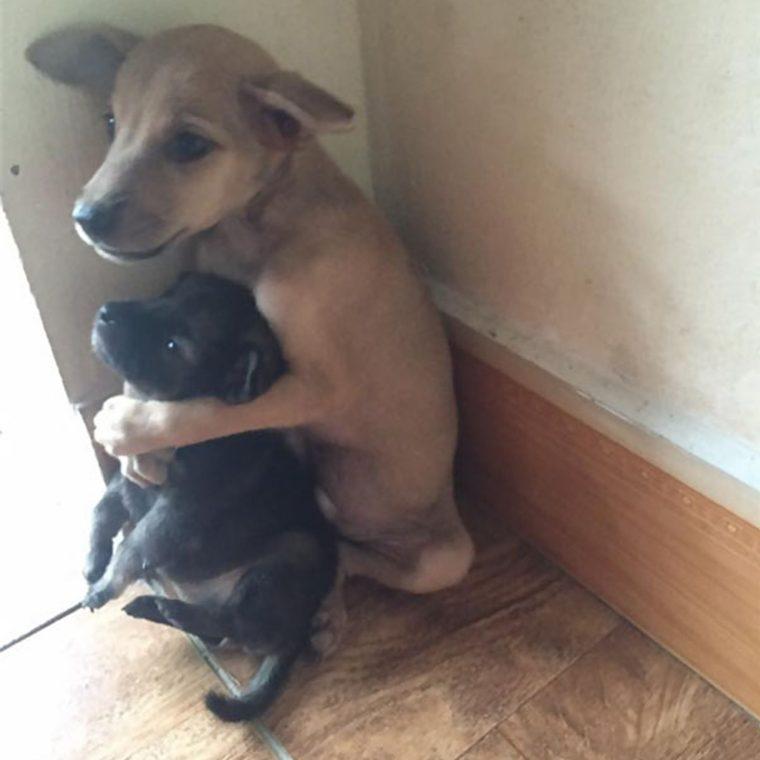 abraço cachorros 3 760x760 - Cachorrinhos ficam abraçados todo o tempo após serem resgatados