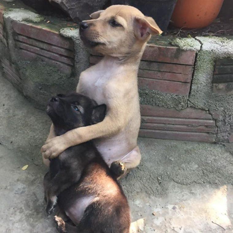 abraço cachorros 4 760x760 - Cachorrinhos ficam abraçados todo o tempo após serem resgatados