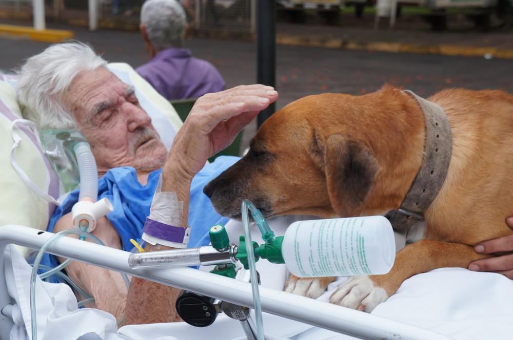 cachorro1 - Idoso internado que chorava de saudade de seu cão no hospital recebe visita do animalzinho