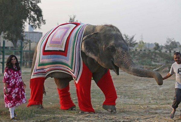 elefanti india 2 - Mulheres indianas criam blusas para salvar elefantes do frio extremo