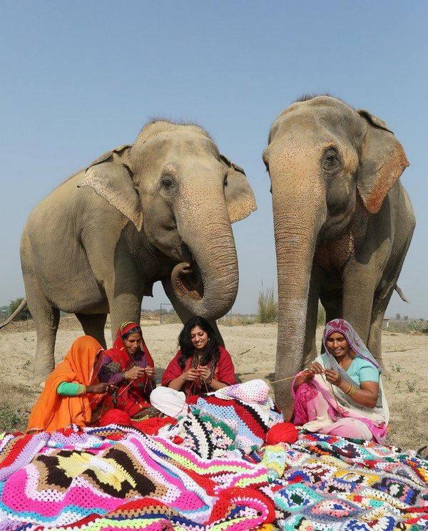 elefanti india 3 - Mulheres indianas criam blusas para salvar elefantes do frio extremo