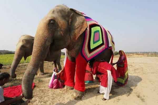 elefanti india 4 - Mulheres indianas criam blusas para salvar elefantes do frio extremo