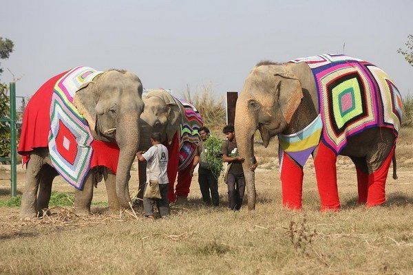 elefanti india 5 - Mulheres indianas criam blusas para salvar elefantes do frio extremo