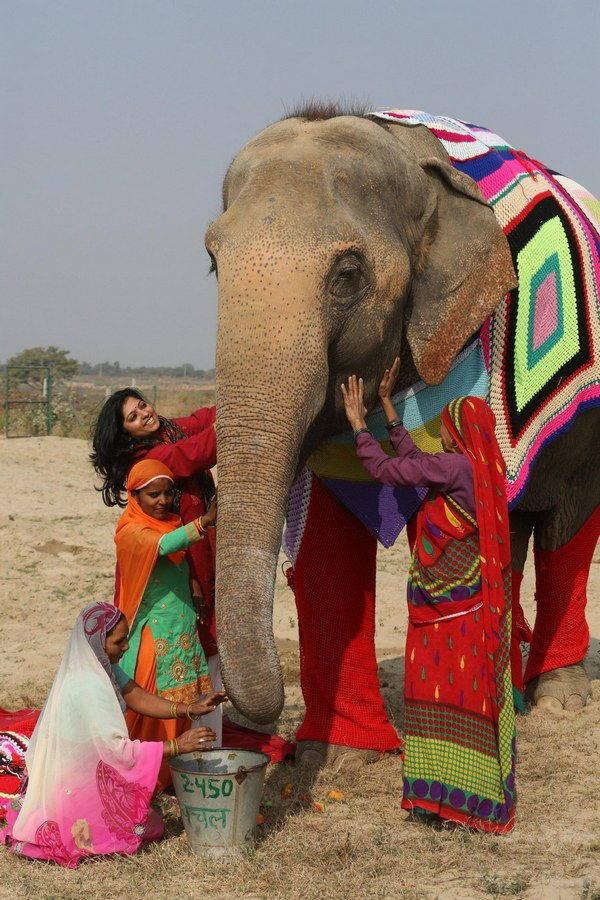 elefanti india 7 - Mulheres indianas criam blusas para salvar elefantes do frio extremo