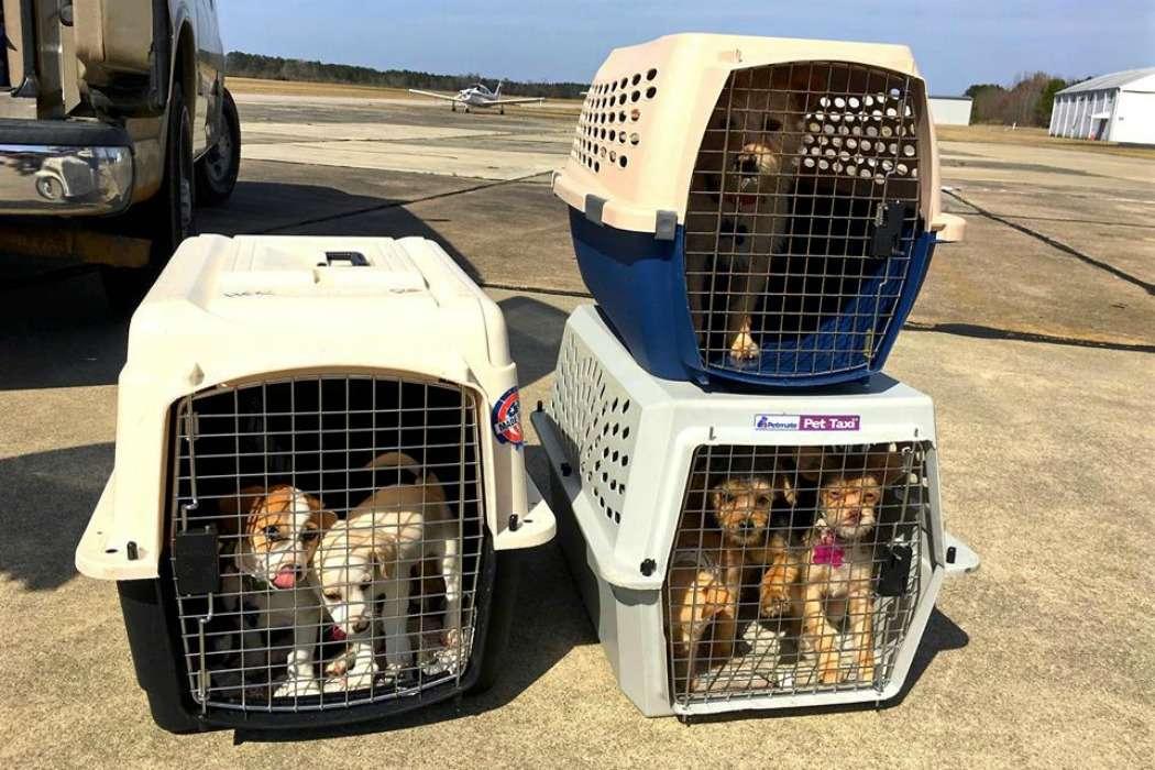 homem salva caes3 - Ex-soldado compra avião para salvar cães e gatos da eutanásia