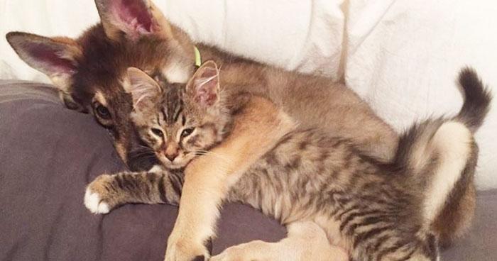 husky dog picks shelter cat friendship raven woodhouse christina 40 - Husky adota gatinho e se tornam melhores amigos inseparáveis