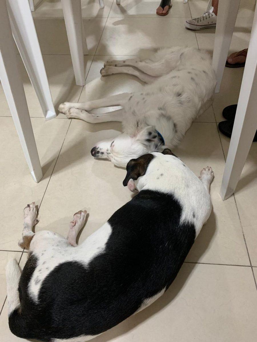 joganegabi scaled - Após ser rejeitado e devolvido, cão surdo é adotado por rapaz surdo