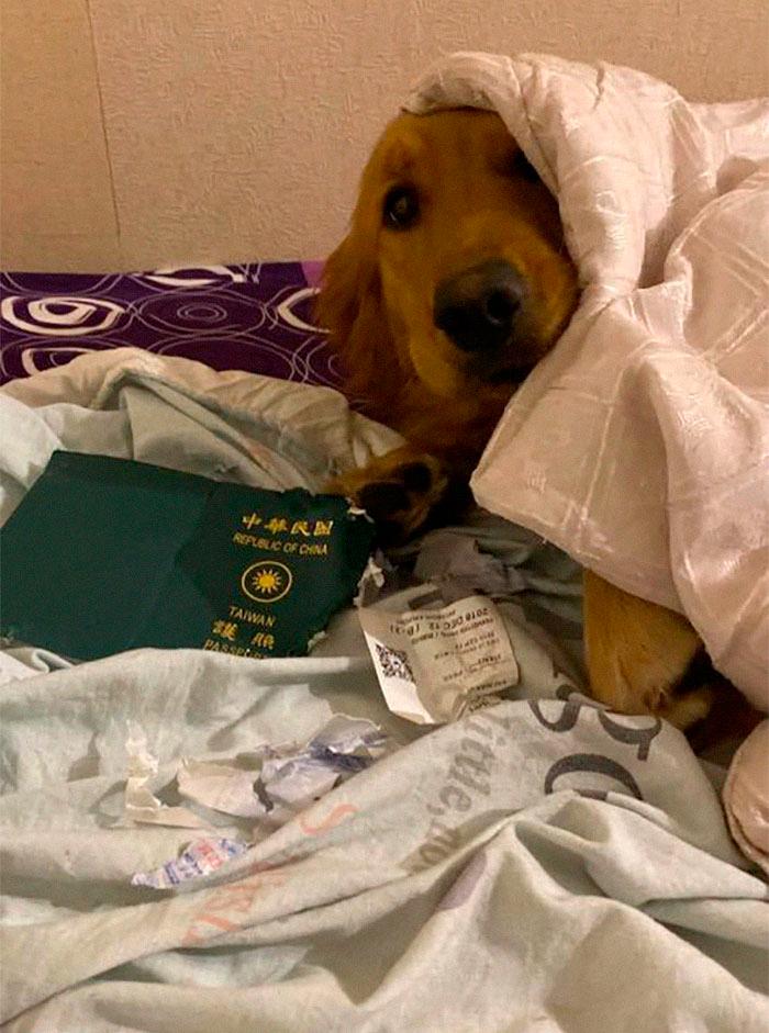passaporte6 1 - Cadelinha come passaporte e livra dona de viajar ao epicentro do coronavírus