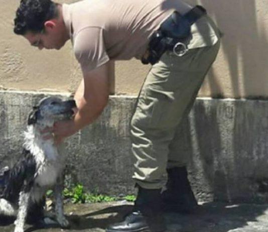policial banho cachorro mangueira 1 1 534x462 - Inicio