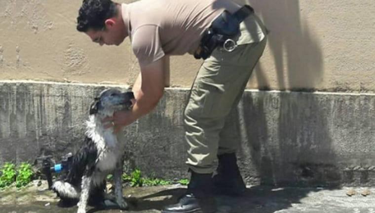 policial banho cachorro mangueira 1 - Policial dá banho e alimenta cão que desmaiou devido ao calor