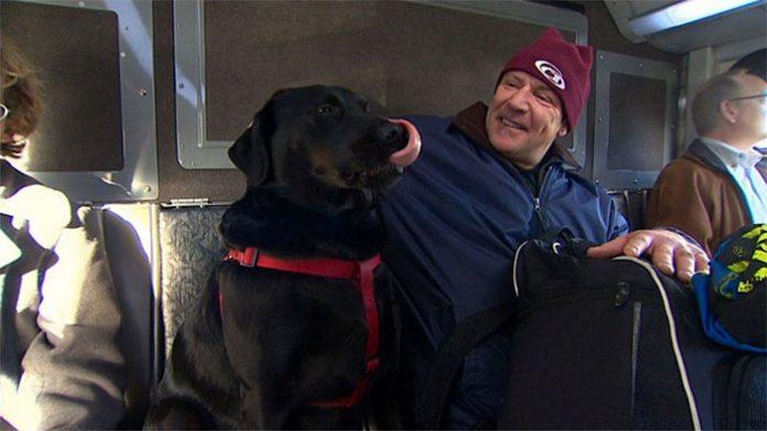 dog rides bus seattle eclipse 5948d579c94b7 700 696x391 1 - Cadela pega ônibus todos os dias sozinha para ir ao parque