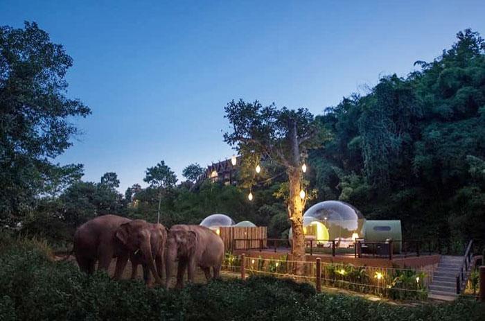 elefanteshotel1 - Neste hotel hóspedes dormem em bolhas na selva em meio a elefantes resgatados