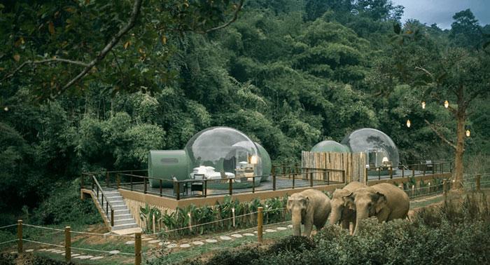 elefanteshotel2 - Neste hotel hóspedes dormem em bolhas na selva em meio a elefantes resgatados