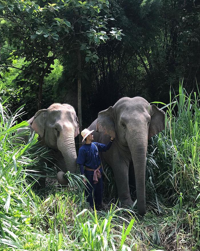 elefanteshotel3 - Neste hotel hóspedes dormem em bolhas na selva em meio a elefantes resgatados
