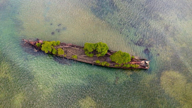 navio confiscado natureza 2 - Natureza toma conta de navio que naufragou há mais de 100 anos