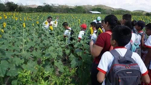 santuario girassol 2 - Foi construído no México um santuário para abelhas apenas de girassóis