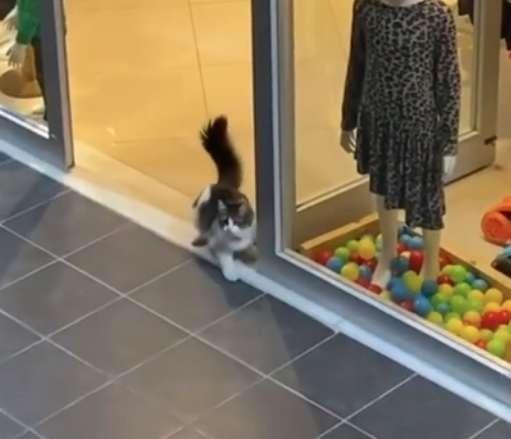 tmg article tall 4 - Gatinho sem lar entra em uma loja e brinca com a decoração da vitrine