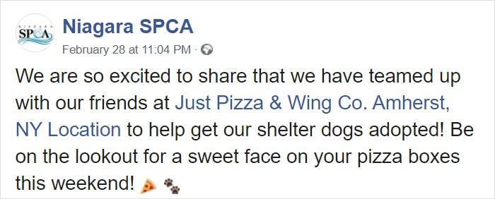 10 5e5e56a4312dc 700 - Pizzaria faz parceria com abrigo e ajuda a adotar cães com fotos em caixas de pizza