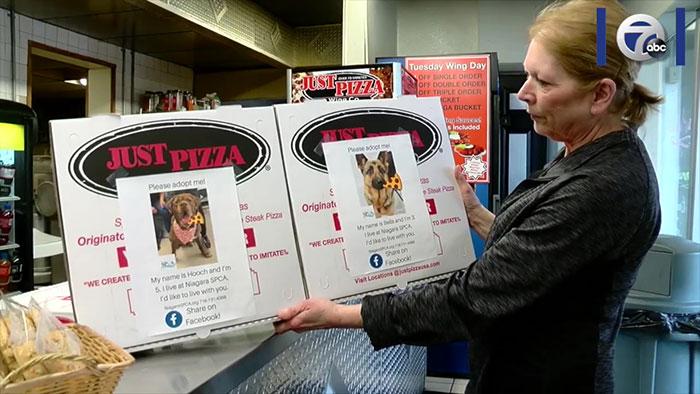3 5e5e55d04b396 700 - Pizzaria faz parceria com abrigo e ajuda a adotar cães com fotos em caixas de pizza