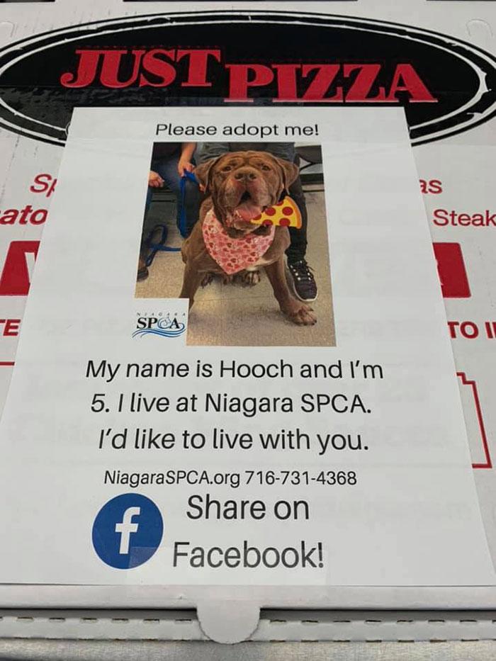 6 5e5e55d6caf57 700 - Pizzaria faz parceria com abrigo e ajuda a adotar cães com fotos em caixas de pizza