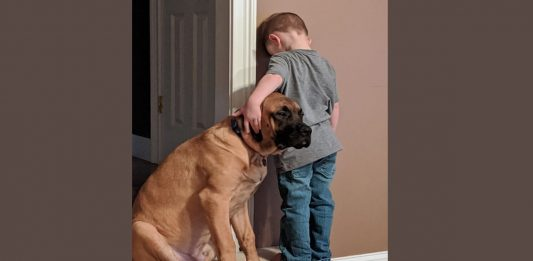 menino castigo cachorrocapa 533x261 - Inicio
