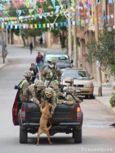 003 - Cães abandonados perseguem carro de militares e acabam sendo adotados