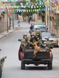 004 - Cães abandonados perseguem carro de militares e acabam sendo adotados