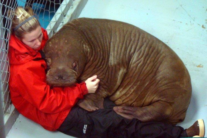 4355860 iJMjeov 1585226412 728 9b654d0827 1586792445 - 10 Fotos que mostram o quanto os animais precisam de nós assim como precisamos deles