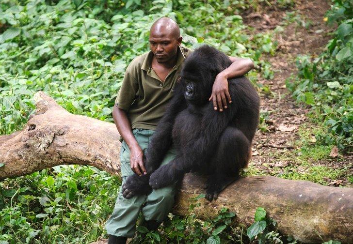 4356560 image crop 2018x1399 1585300904 728 996047ba34 1586792445 - 10 Fotos que mostram o quanto os animais precisam de nós assim como precisamos deles