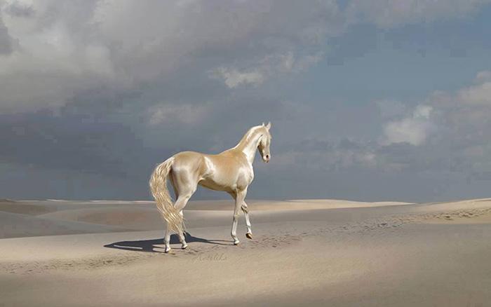 6 27 - Cavalo que tem uma pelagem brilhante como ouro encanta o mundo todo