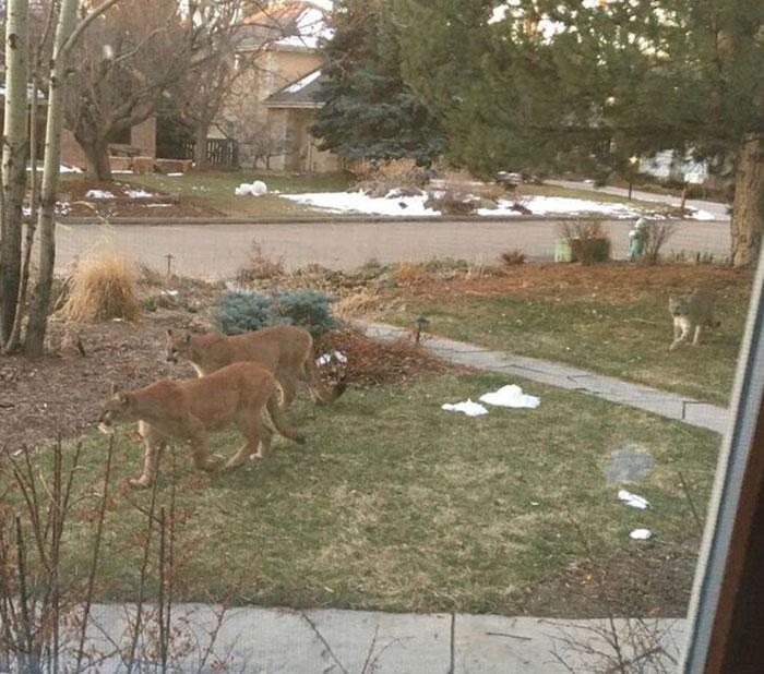 animals roam streets coronavirus quarantine 1 5e7cc8b517a2a 700 - Animais aproveitam cidades em quarentena para conhecê-las e relaxarem