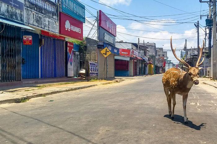 animals roam streets coronavirus quarantine 5e8b1fd215ff1 700 - Animais aproveitam cidades em quarentena para conhecê-las e relaxarem