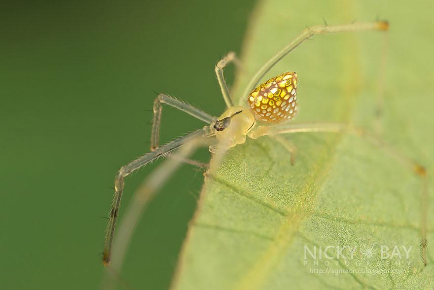aranha2 - Essa fantástica aranha parece ser coberta de espelhos
