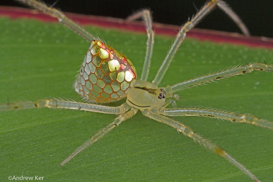 aranha3 - Essa fantástica aranha parece ser coberta de espelhos