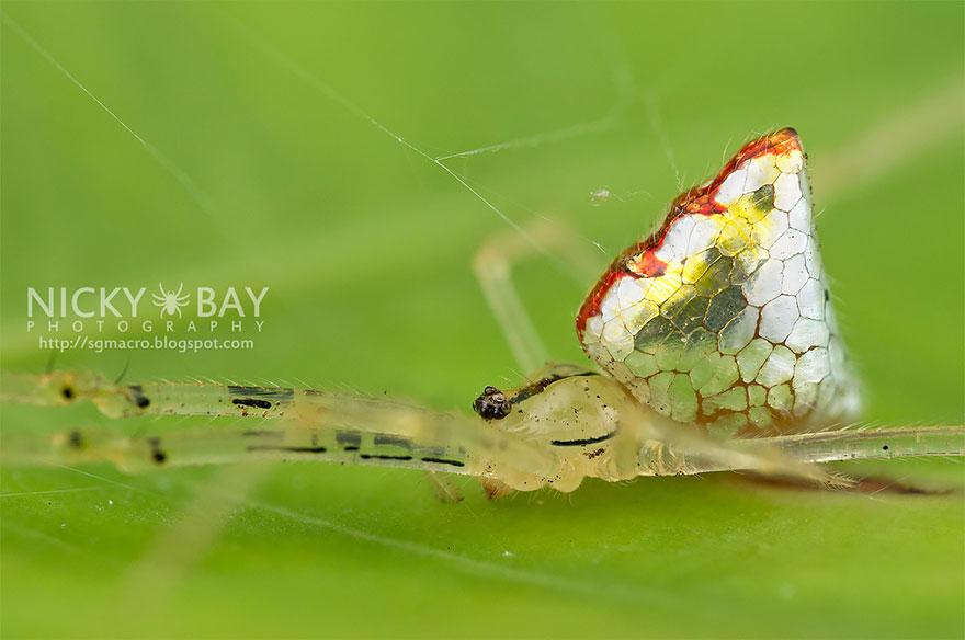 aranha5 - Essa fantástica aranha parece ser coberta de espelhos