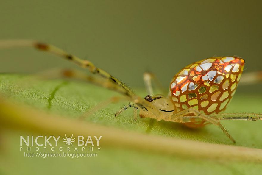 aranha6 - Essa fantástica aranha parece ser coberta de espelhos