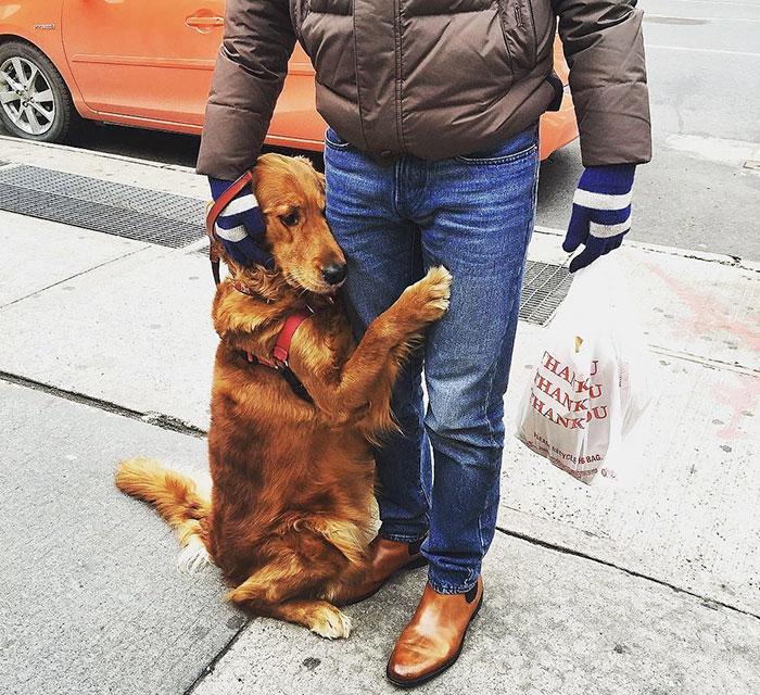 dog gives hugs louboutina retriever new york 11 - Este Retriever amou abraçar e está obcecado em abraços
