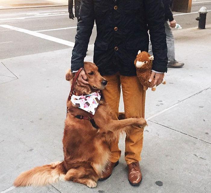dog gives hugs louboutina retriever new york 19 - Este Retriever amou abraçar e está obcecado em abraços