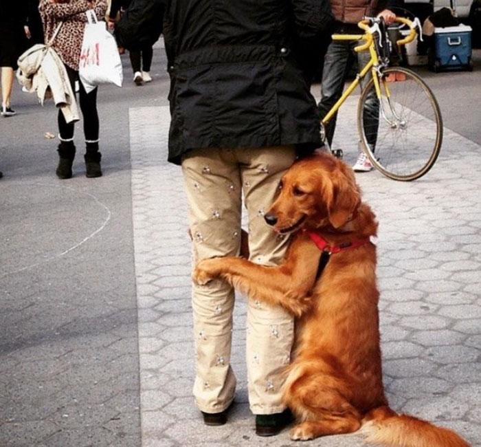 dog gives hugs louboutina retriever new york 4 - Este Retriever amou abraçar e está obcecado em abraços